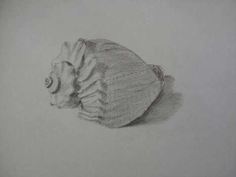 Shell (Pencil Drawing) Still Life by Marites73
