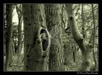 Woodland (2010 Pic 30 Bw) by Chattering-Magpie