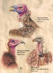 African vultures 1