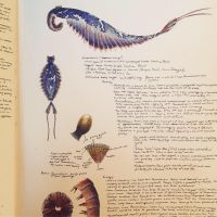 Anomalocaris sketchbook page by PrehistoryByLiam