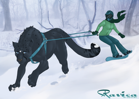 Golden Claw Event 2015 - Skiijoring by Ravica