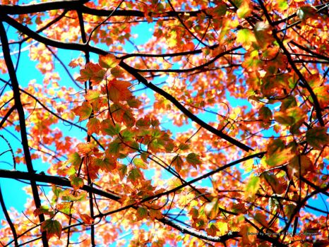 Fall Leaves by siutou-amy