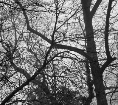 Trees around My House Two by jules-101