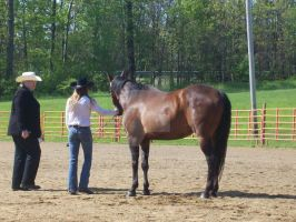 showmanship by horse-stock