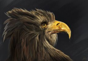 Eagle Portrait by RedSaucers