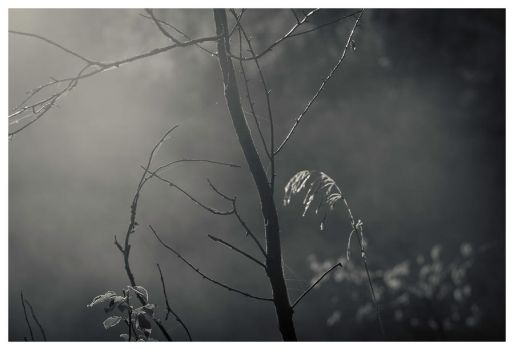 A Sense of Foreboding by alexettinger