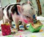 pig by cosmin92