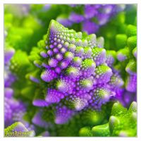 Natural fractals - romanesco by DianePhotos