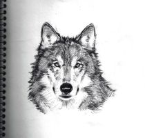 Wolf Sketch by ChevronLowery