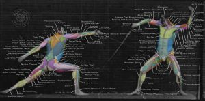 Downloadable PSD Anatomy Tutorial: Surface Muscles by eajna