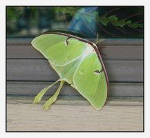 Moth.L1030220, with story by harrietsfriend