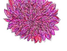 Flower by jaquay