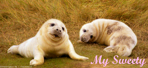 Baby seal for Henrieke03 by Coulsonite