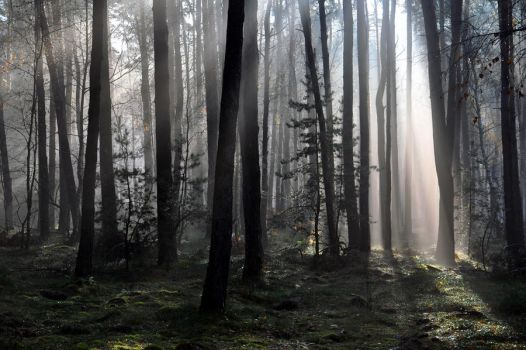 Forest Light by tomsumartin