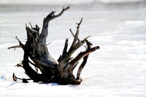 Winter Driftwood by El-Sharra