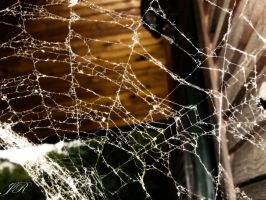 charlotte's web by J-and-R