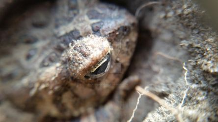 Toad in the Hole - Macro by KalitheArtist