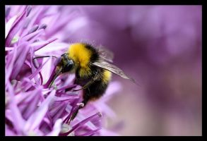 Bee. by Alannah-Hawker