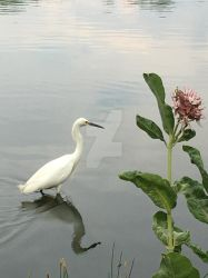 Water-wading White Egret by CelestialPearl