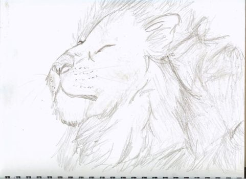 Lion by Shadows-reflection