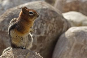 The Chipmunk of Notre Dame by ChristophMaier
