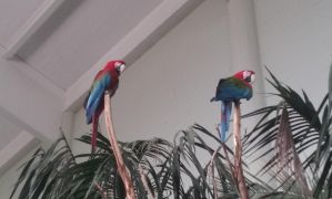 Tropical Macaw by DayDreamPrincess