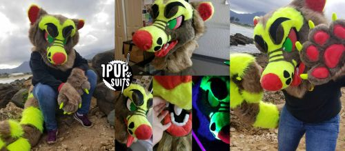 Tazard by 1PUPsuits