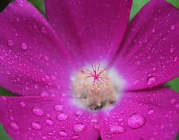 Pink Droplet by AbstractDr3ams