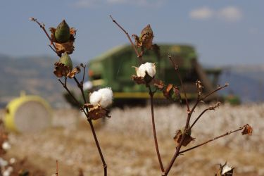 Cotton revolution by yori1976