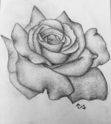 Just A Rose by Surdy12321
