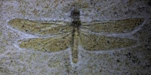 Fossilized Dragonfly (of Death) by Crigger