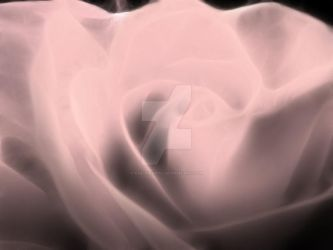 Digital White Rose by Kae-Infinity