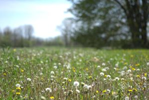 dandelion view by cognisant