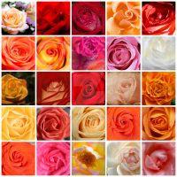 Bouquet of Roses by Seraena