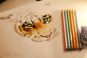 Sketch tiger cub by Michelle-Winer