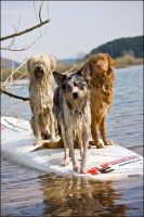 Surf dogs... by Majchy