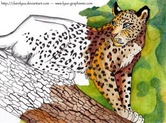 Leopard in a tree by ClaireLyxa