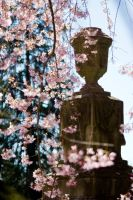 Monument in Bloom by robertllynch