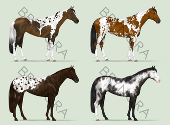 Equine Adoptables [3/4 OPEN] by brynora