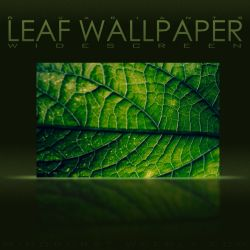 Leaf Wallpaper by NKspace