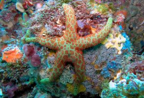 another starfish.. by leighd