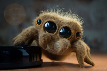 CUTE JUMPING SPIDER Needle Felted by Lyntoys