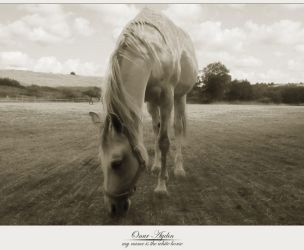 my name is the white horse by nerval