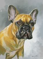 Bored frenchie by KardisArt