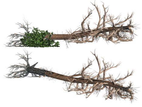 Fallen Trees 02 PNG Stock by Roy3D