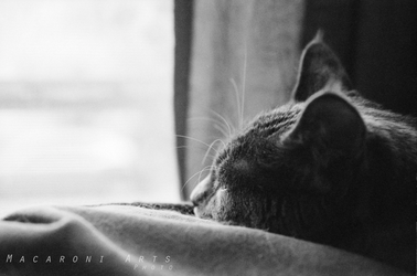 Sophie Enjoys the Afternoon Light by thebreat