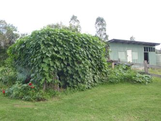 Shed Covered in Vines by GoblinStock