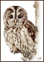 owl scientific illustration by lacidart