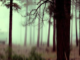 Surreal Forest by Analy-Aranda