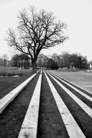 Tree Perspective by TheMetronomad